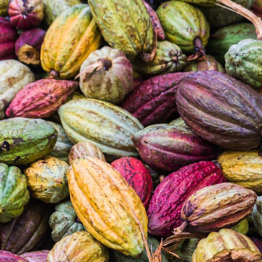 los orígenes del cacao